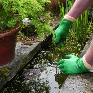 ands wearing green SHOWA 600 gloves while cleaning pond