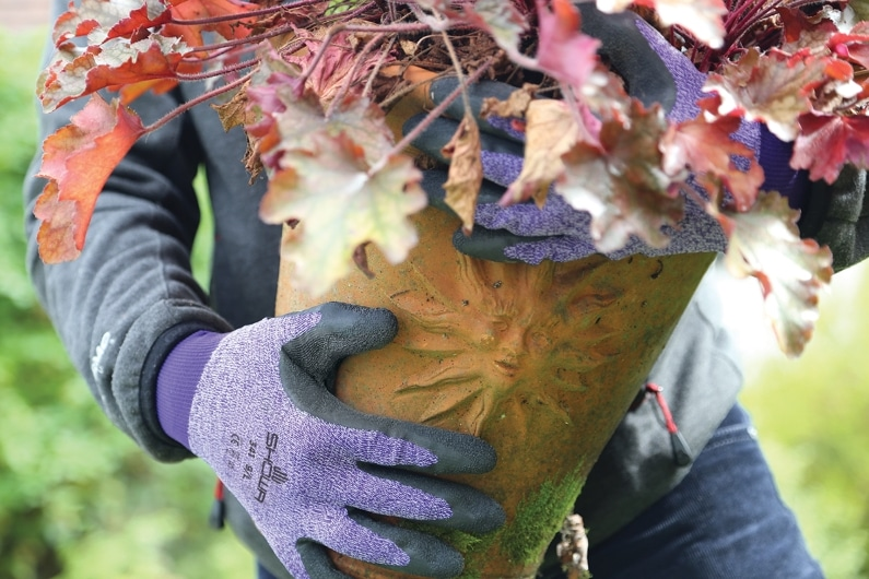 hands carrying a large plant pot with a sun motif wearing purple SHOWA 341 gloves