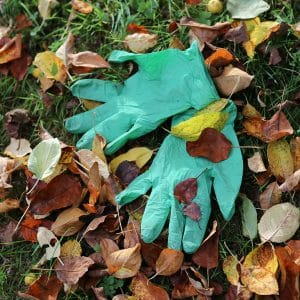 a pair of SHOWA 6110 biodegradable gloves on the grass surrounded by fallen brown leaves