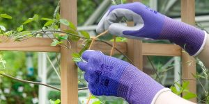 Hands wearing SHOWA 370 Floreo gloves in purple trying string to plant and trellis