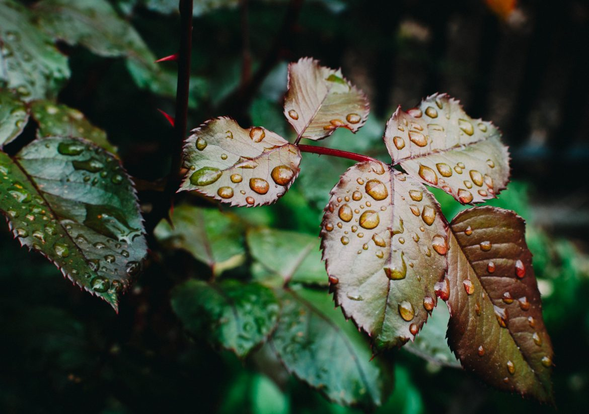 close up of wet leaves with raindrops