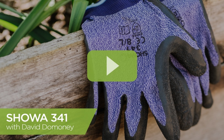 SHOWA 341 With David Domoney