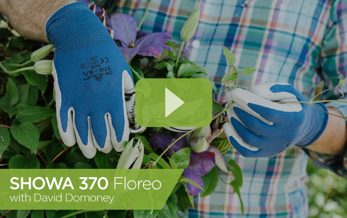 SHOWA 370 'Floreo' With David Domoney