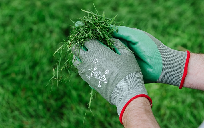 hands wearing SHOWA 4552 biodegradable gloves holding grass cuttings