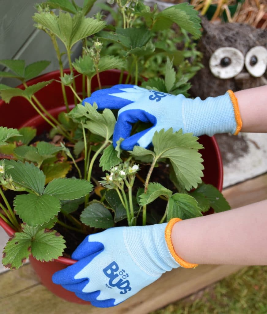 Blue Buds childrens gloves with a potted plant