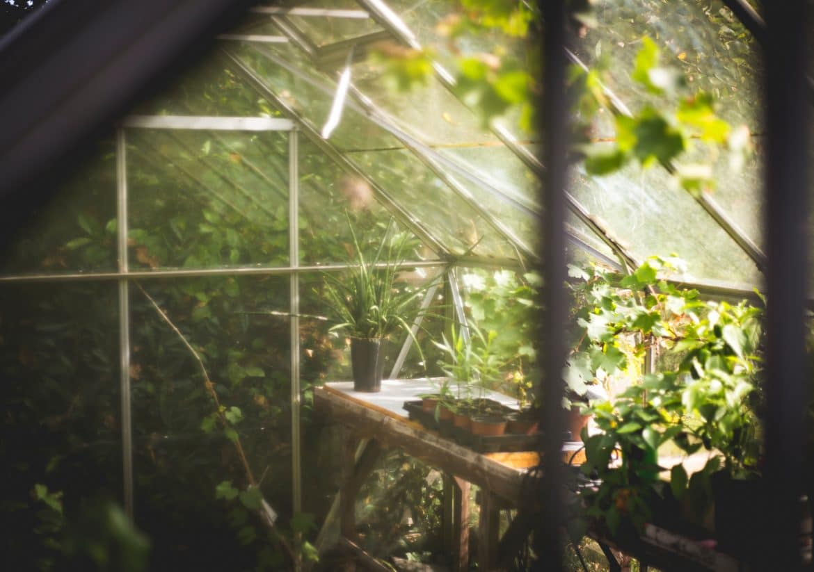 Inside a greenhouse, looking out to the garden