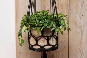 Hanging Basket with green plants