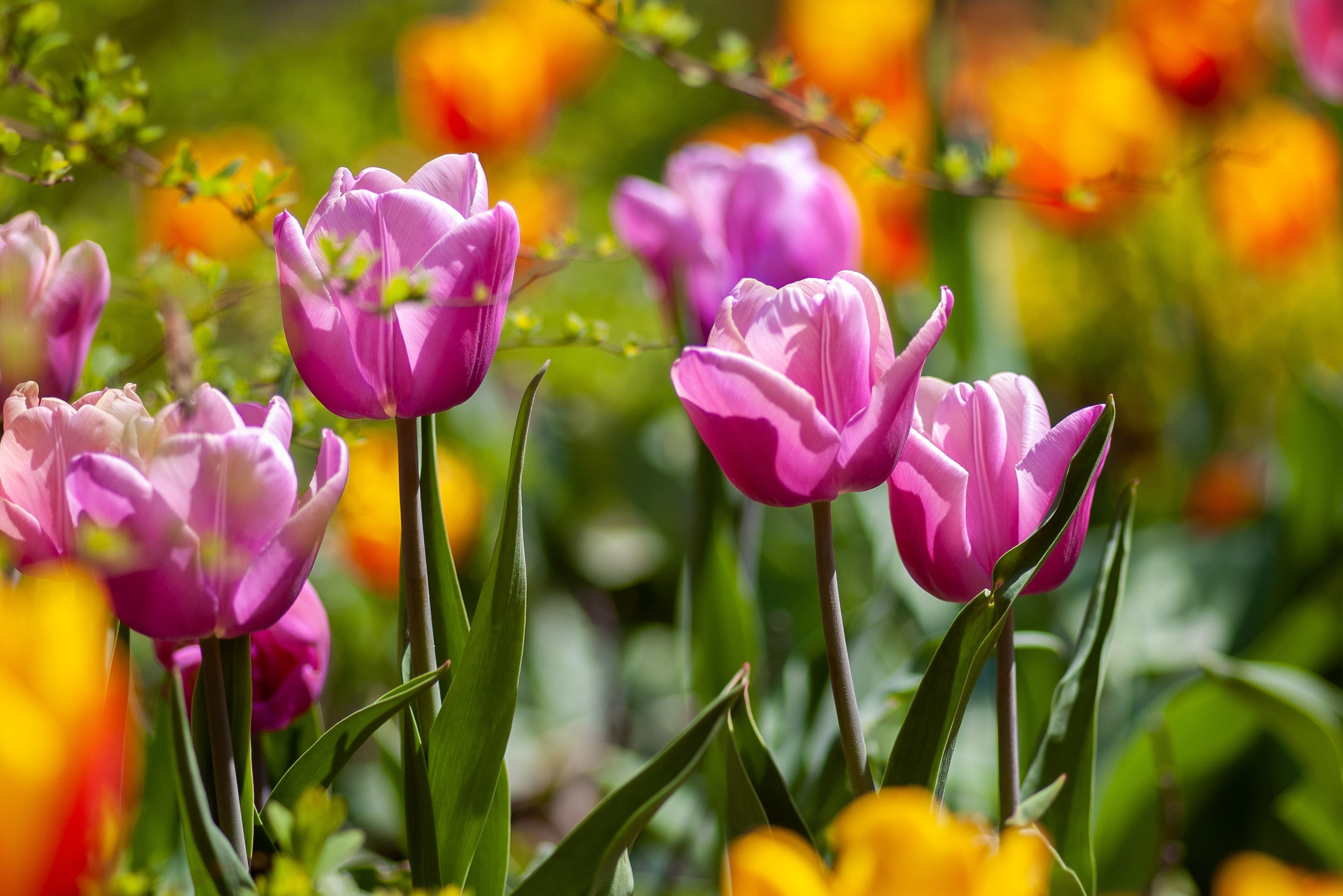 How to prep your garden for spring with the perfect safety wear