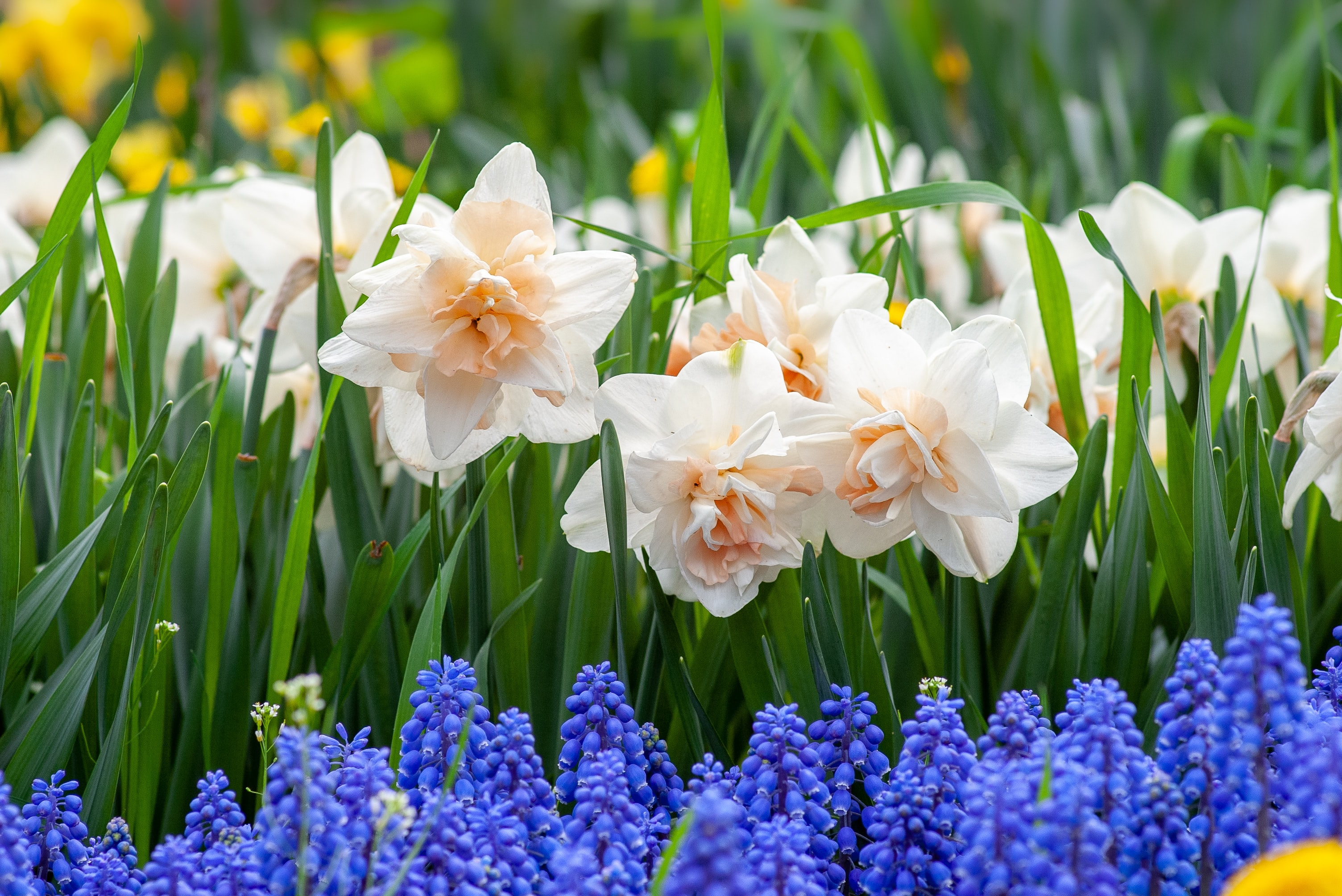 Seasonal gardening: Why Spring blooms are beautiful